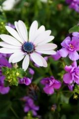 tahtisilma_ja_kerrottu_laventelisininen_lumihiutale