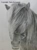 Hevonen, lyijykynätekniikka, koko kehystettynä 64,5 x 81,0, 450 €