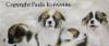 Koiranpennut, öljyväri, 250 €