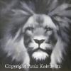 Leijona, öljyväri, 40 x 40, 350 €