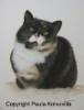 Kissa, pastelliliitu