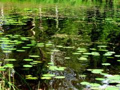 Lampi/Pond