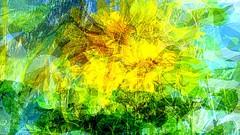 Kesätuulen puuska/Summer wind gust