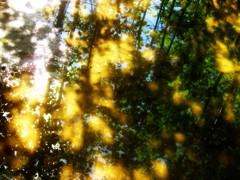 Valon sanansaattajia/Light messengers
