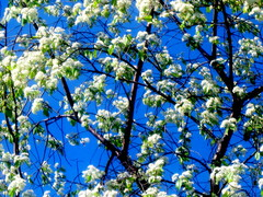 Lumikukkia/Snow Flowers