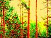 Metsä/Forest