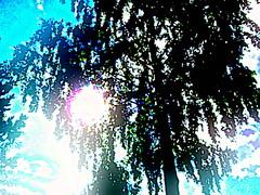 Auringon häikäisy/Sun glare