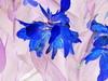 Keijukukkia/Fairy Flowers