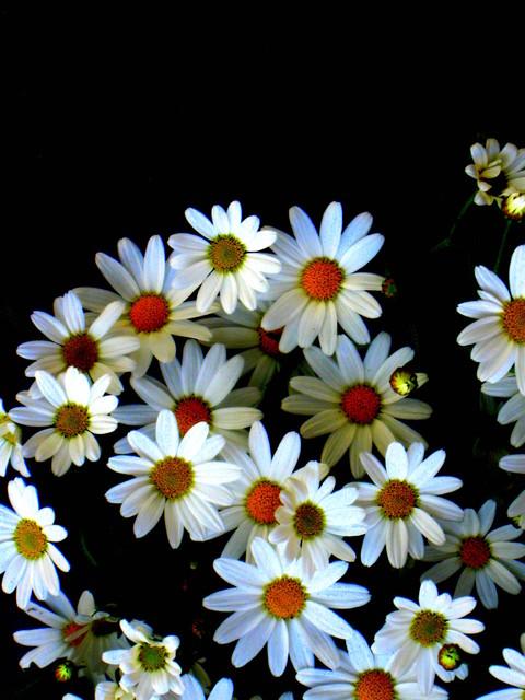 Kukkiva pimeys/Blossoming darkness