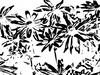 Läpinäkyviä kukkia/Transparent flowers