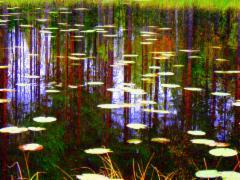 Syksyinen lampi/Fall Pond