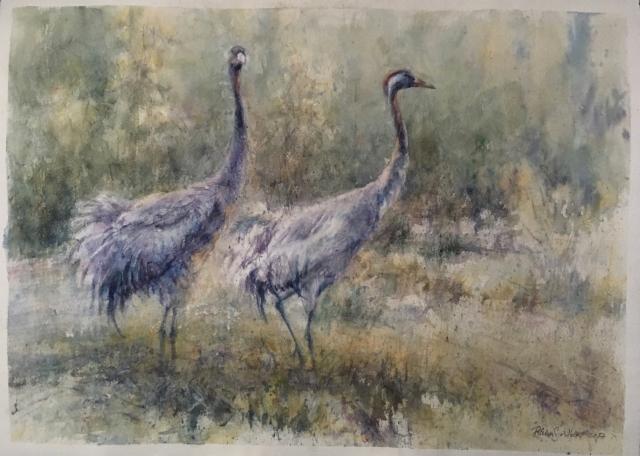 Kurjet - Cranes