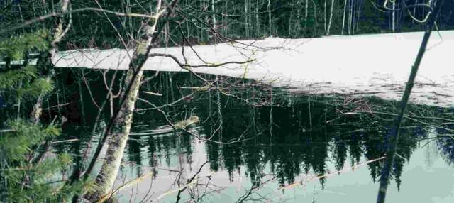 kuva_097_majava talvipesalle menossa