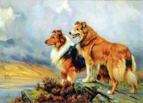 two_collies.jpg&width=280&height=500