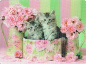 cats_green_and_pink.jpg&width=280&height=500