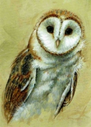 owl_nature_trail.jpg&width=140&height=250