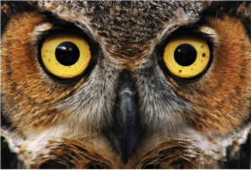 portrait_owl.png&width=280&height=500