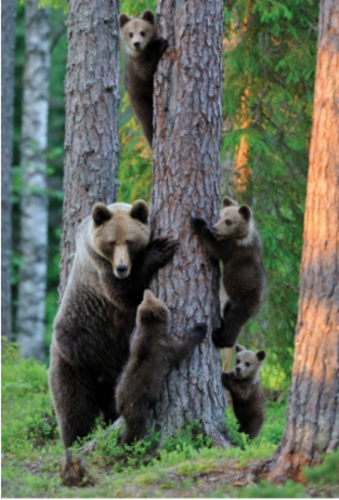 bear_family.png&width=280&height=500