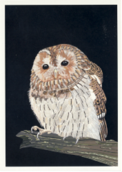 tawny_owl.png&width=140&height=250