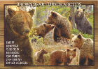 brown_bear.png&width=140&height=250