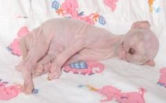 naked girl sleeping