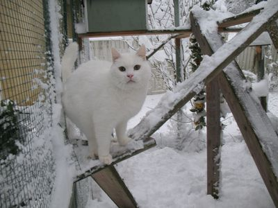 our_old_snowball_in_november_2008.jpg