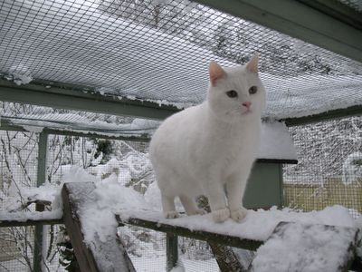 snowball_loves_snow.jpg