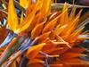 Flowers of Madeira
