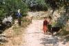 Childrens from  Antalya