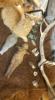 Luonnontuhkalasitteinen pikari