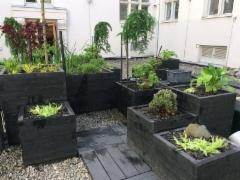 Itämaisia kasveja