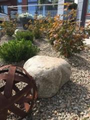 Kiviä ja pensaita