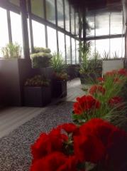 Pelargonia ja heinää