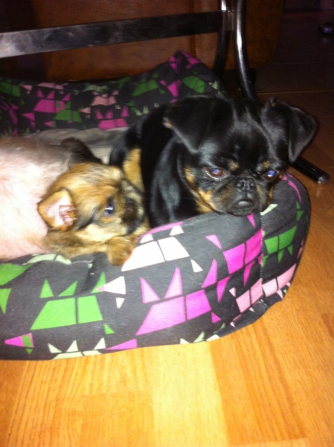 pippin ja Lilla
