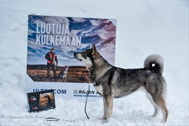 BIS I-koira: Karhupetäjän Jänta
