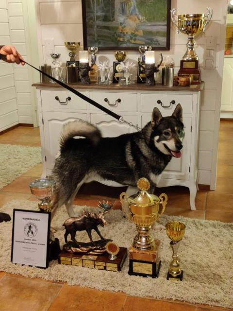 Urosten vuosimaljakilpailun voittaja Uilonpuron Sumu