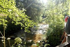 Joki virtaa pienenä purona