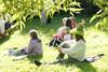 retkeilijät nurmikolla vasten auringon silkaa...