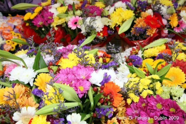 kukat loistavat kilpaa dublinin kukkatorilla