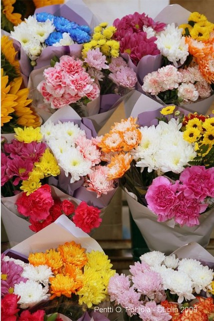 kukkien loistoa