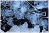 Jääsillat