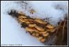 Talvisäilössä