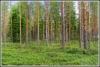 Metsän lumo