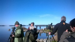 Staijareita Leerviikinniemellä (c) Tiina Mäkelä