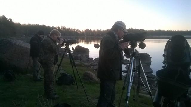 Staijausta, Virolahti, Leerviikinniemi klo 5 (c) Tiina Mäkelä