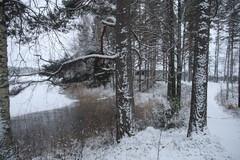Luminen polku johtaa tsasounalle.