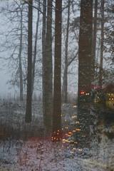 Korpijärvi peittyy usvaan ja lumeen. Ikkunaan heijastuvat jouluvalot herättävät joulutunnelman odotusta.
