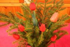 Joulutulppaanit ja havut kahvipöydän kaunistukseksi