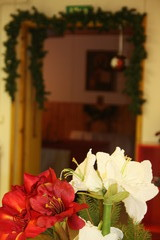 Havuköynnös ja amaryllikset koristavat salia.