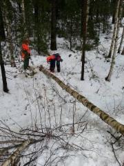Metsurit töissä